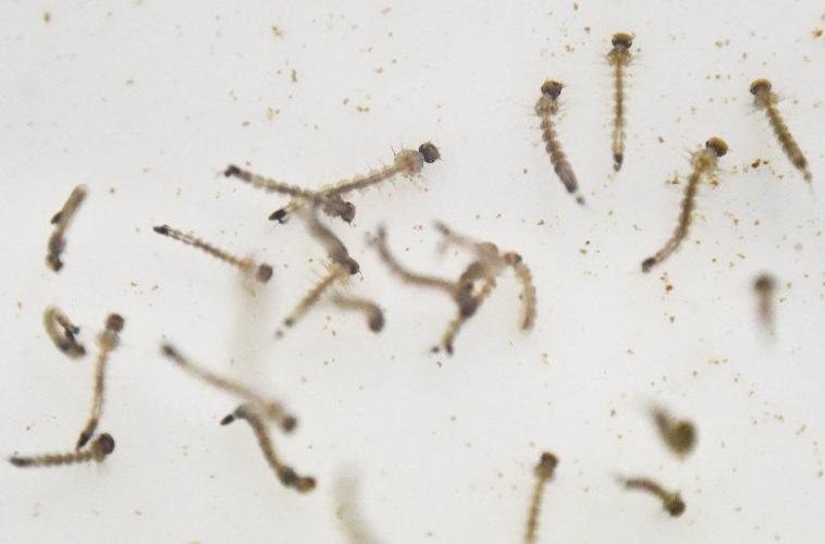 Zika-Virus-Voie-Sexuelle-Texas-2