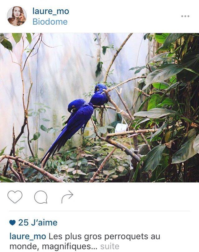 Instagram-Maj-2