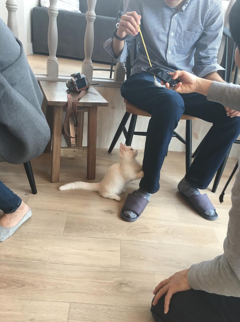 Cat-Cafe-Fermeture-Tokyo-1