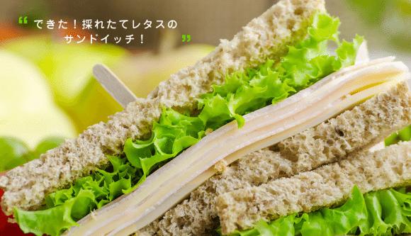 Foop-Jardin-Interieur-Japon-7