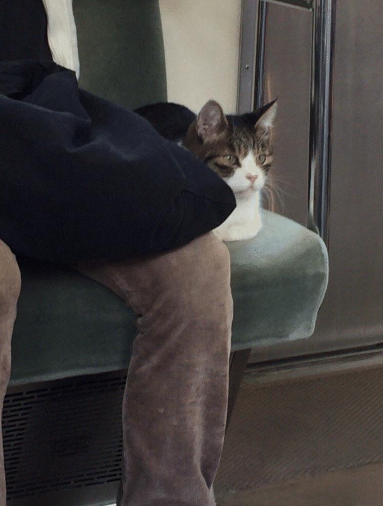 Kokoro-Metro-Tokyo-3