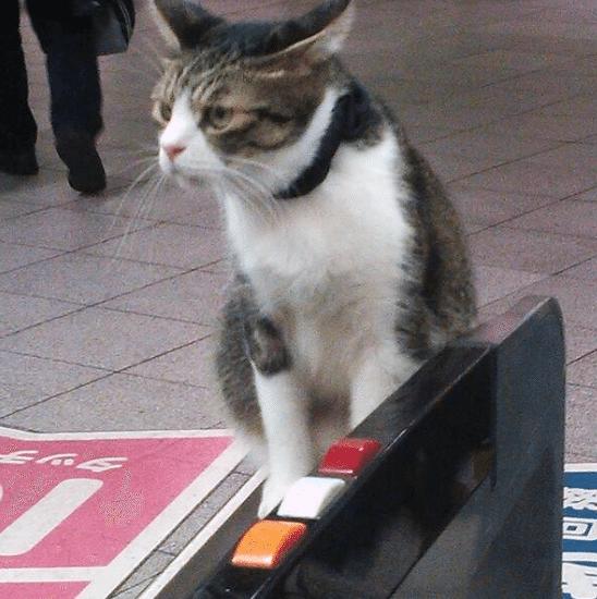 Kokoro-Metro-Tokyo-4
