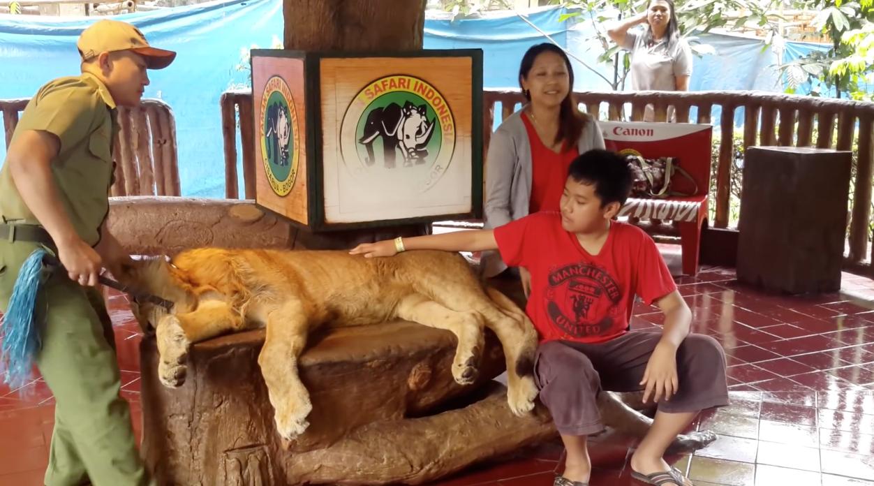 Lion-Drogue-Indonesie-1