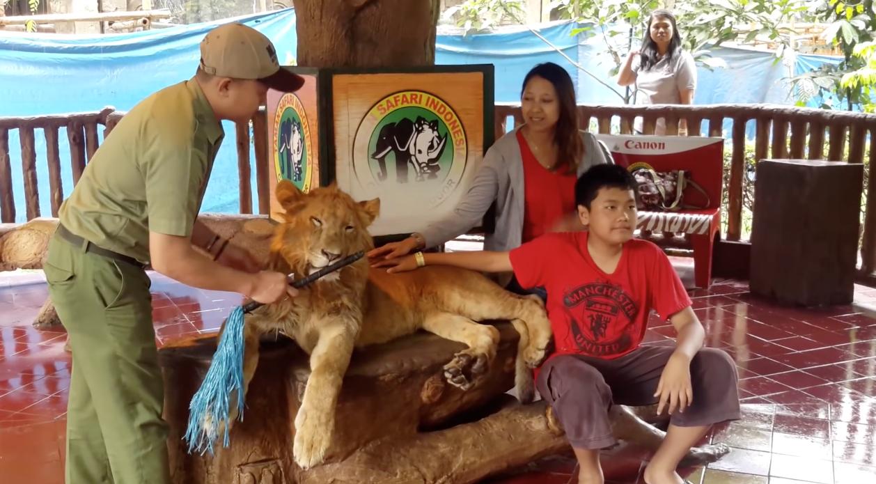 Lion-Drogue-Indonesie-2