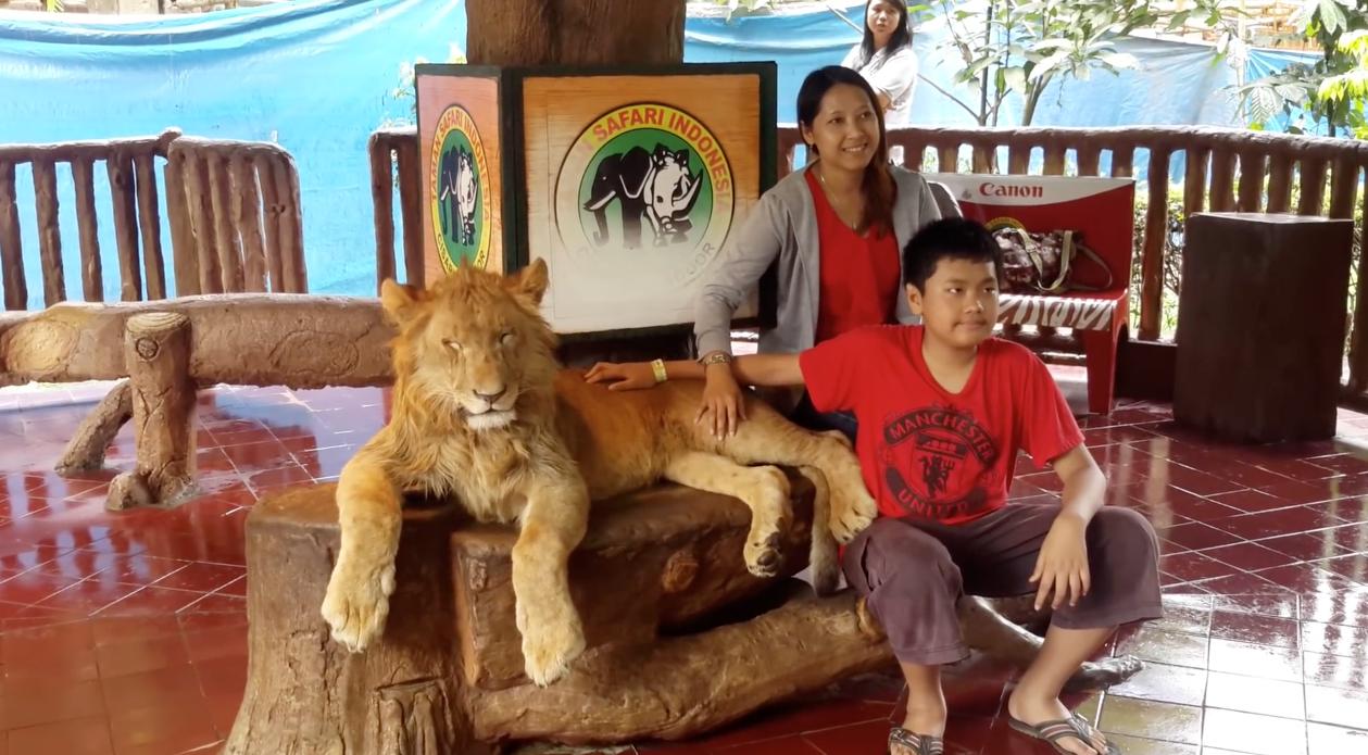 Lion-Drogue-Indonesie-3