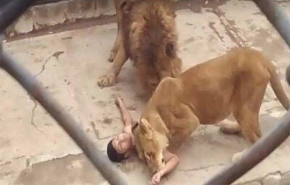 Chili-Lions-Suicide-1-Bis