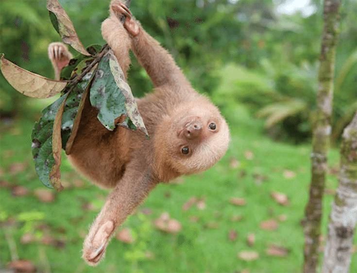 Sloth-Institute-Paresseux-4