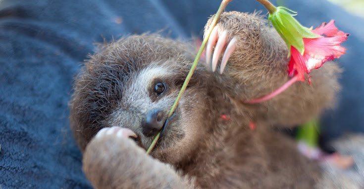 Sloth-Institute-Paresseux-8