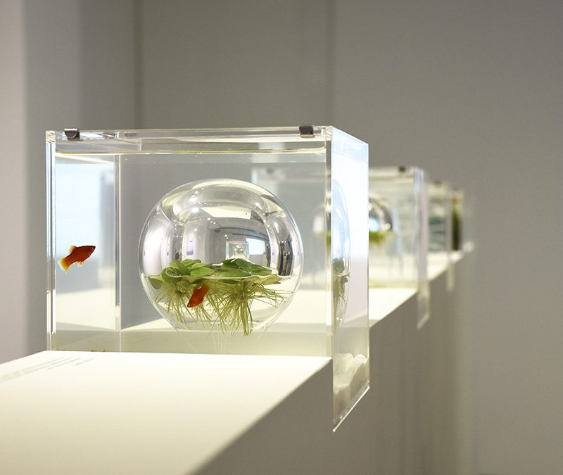 Waterscape-Poissons-10