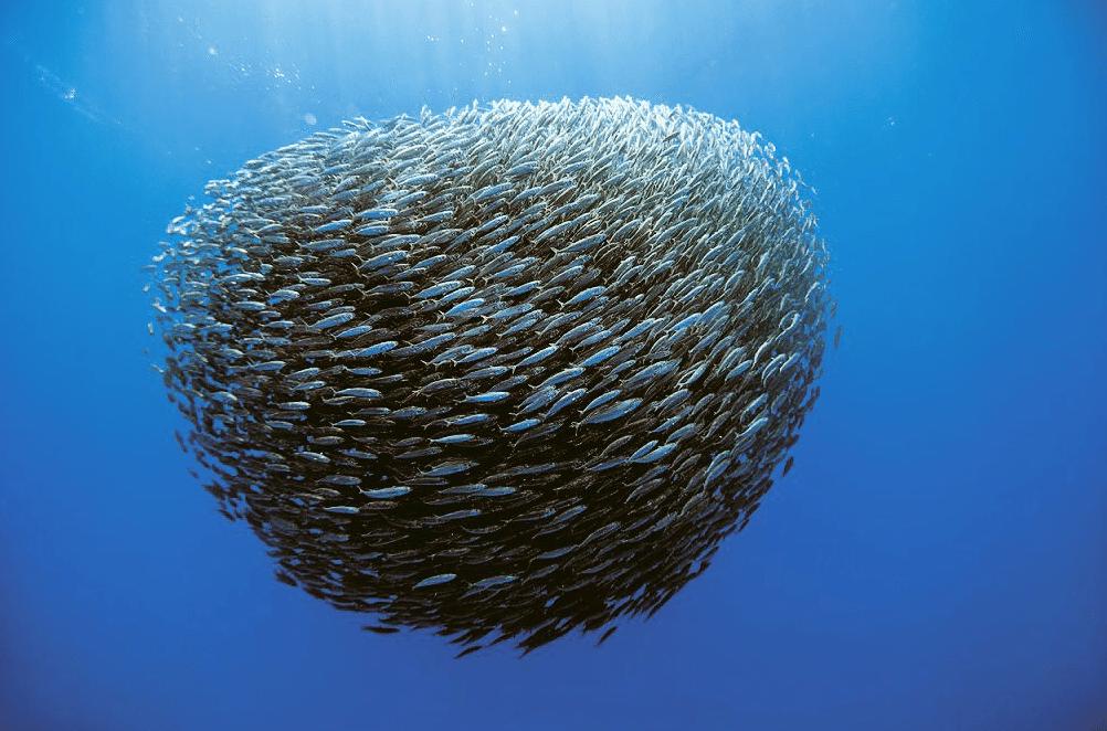Journee-Mondiale-Oceans-1