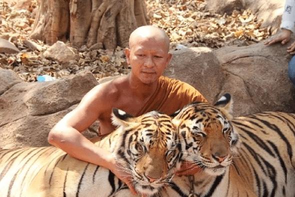 Temple-Tigre-Evacuation-Bebes-Tigres-2