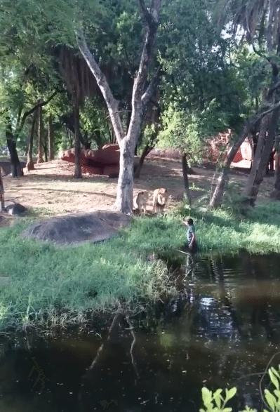 Zoo-Hyperabad-Inde-Lions-4