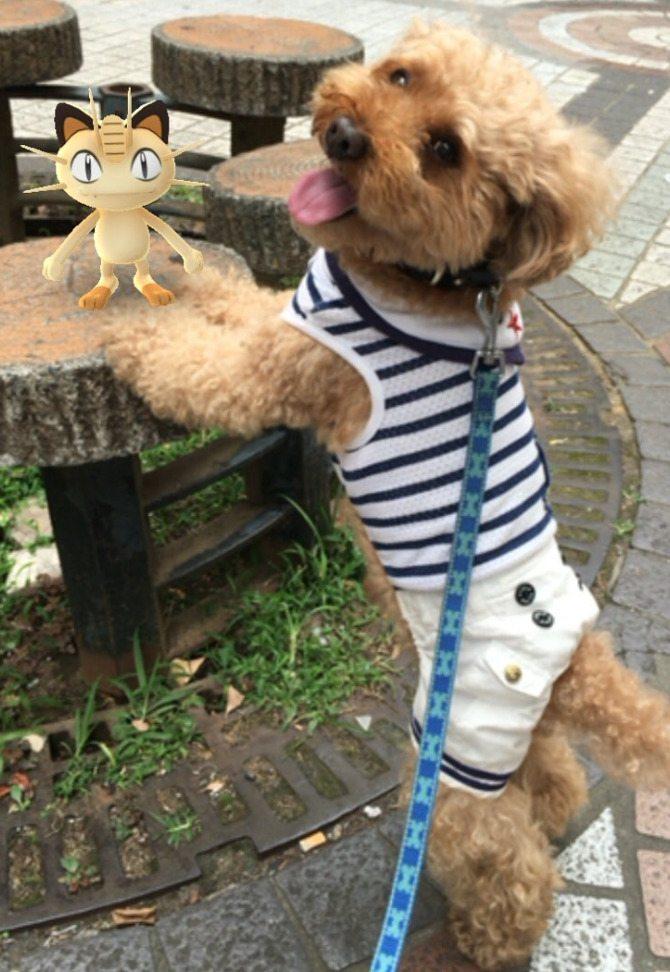 Pokemon-Go-Animaux-Japon-10
