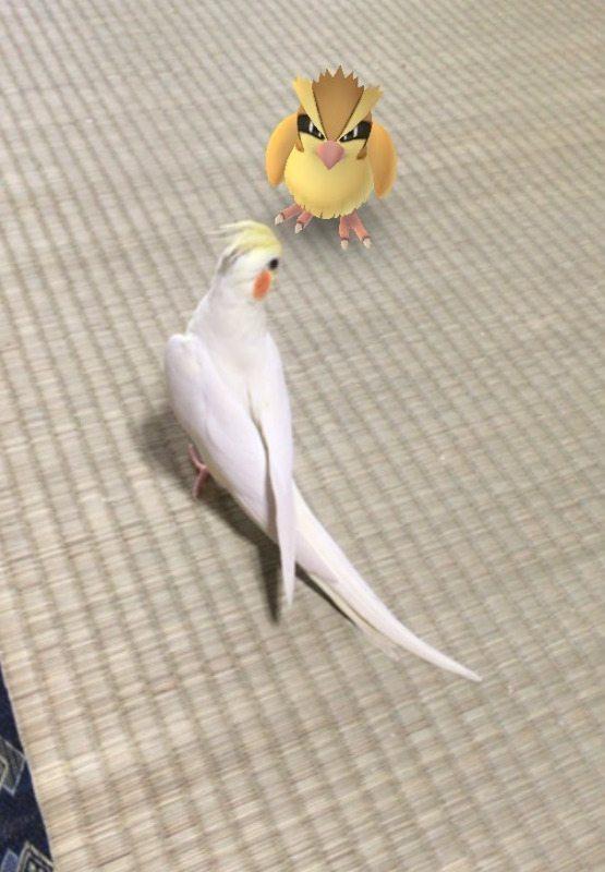 Pokemon-Go-Animaux-Japon-12