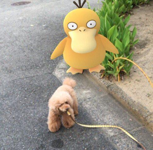 Pokemon-Go-Animaux-Japon-15