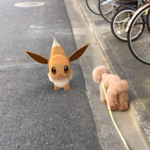 Pokemon-Go-Animaux-Japon-16