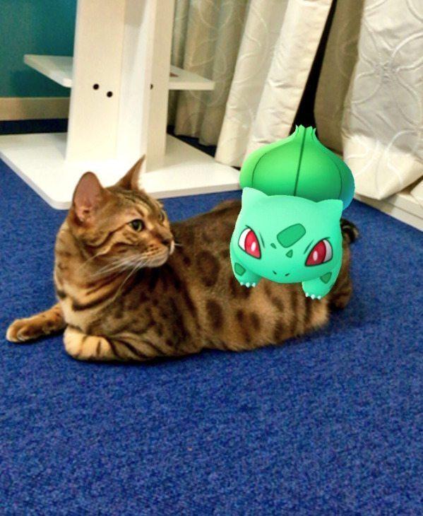 Pokemon-Go-Animaux-Japon-19
