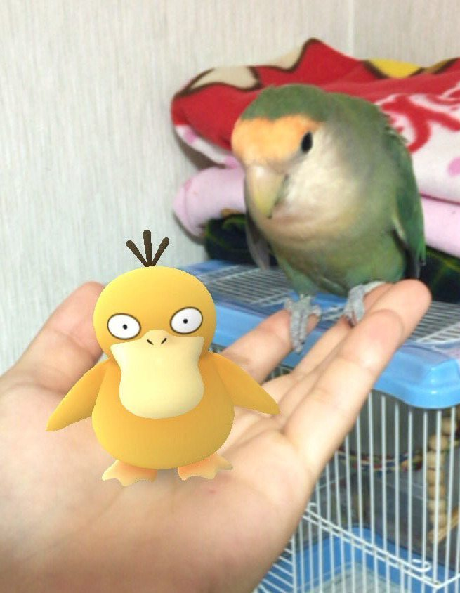 Pokemon-Go-Animaux-Japon-21