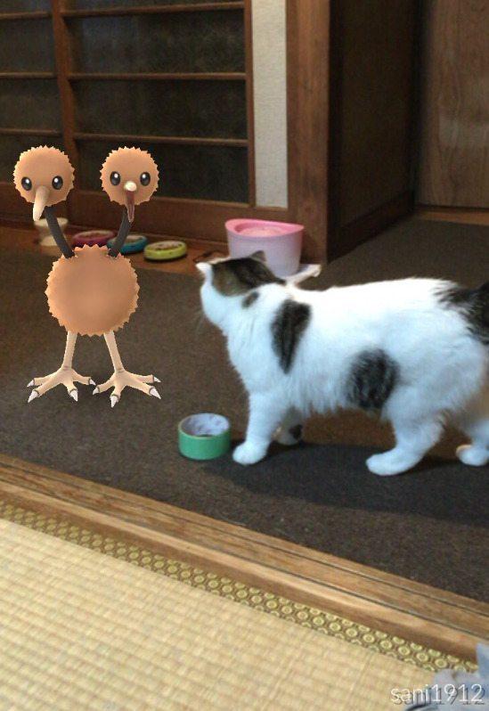 Pokemon-Go-Animaux-Japon-7