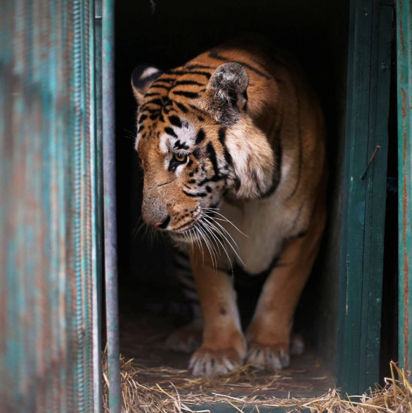 Zoo-Gaza-Evacuation-3