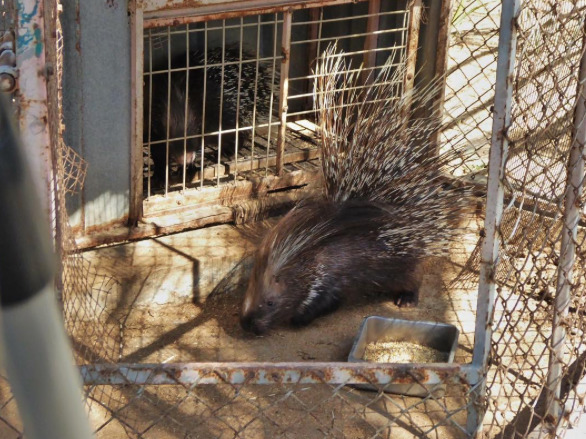 Zoo-Gaza-Evacuation-4