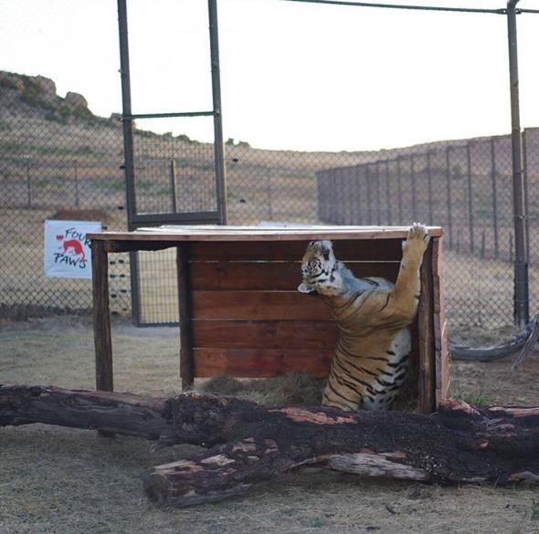 Zoo-Gaza-Evacuation-6