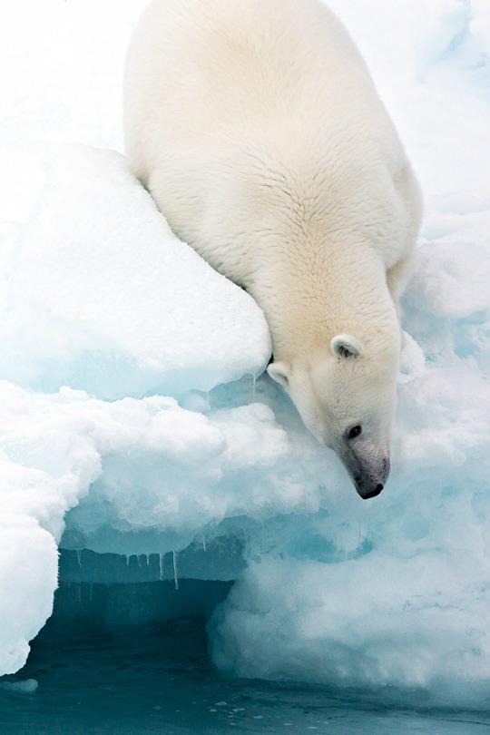 arctique-temperatures-3
