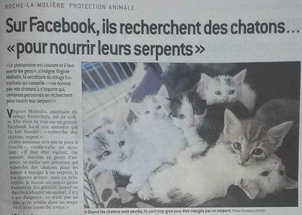 groupe-facebook-chatons-chiots-serpents-2