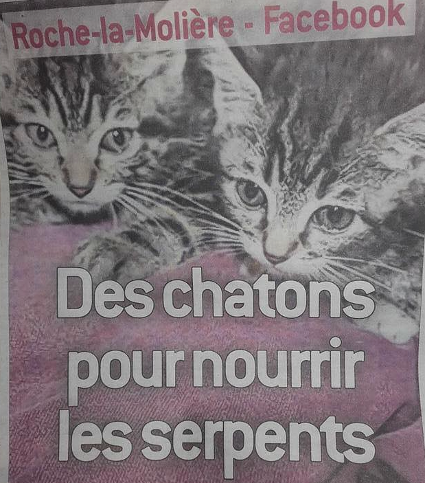 groupe-facebook-chatons-chiots-serpents-3