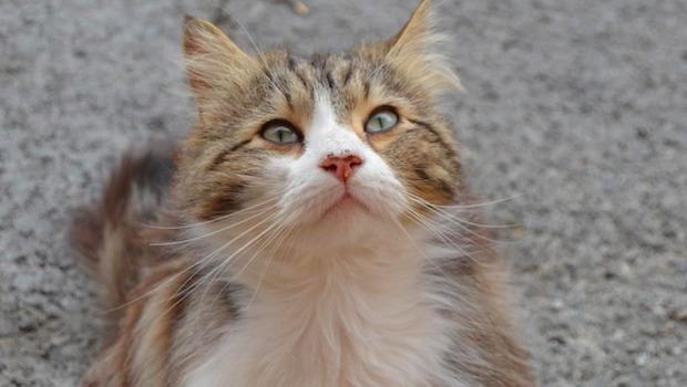 chat rencontre Draguignan